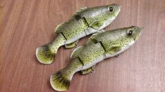 More baby Murray cod