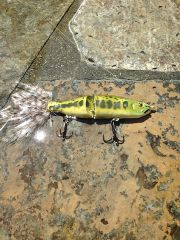 alpha bait in bass color
