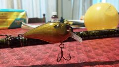 golden shiner/bream