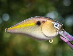 Threadfin Shad