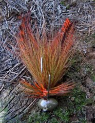 Bucktail and hackle