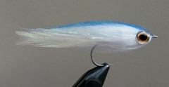 Blue Back Baitfish
