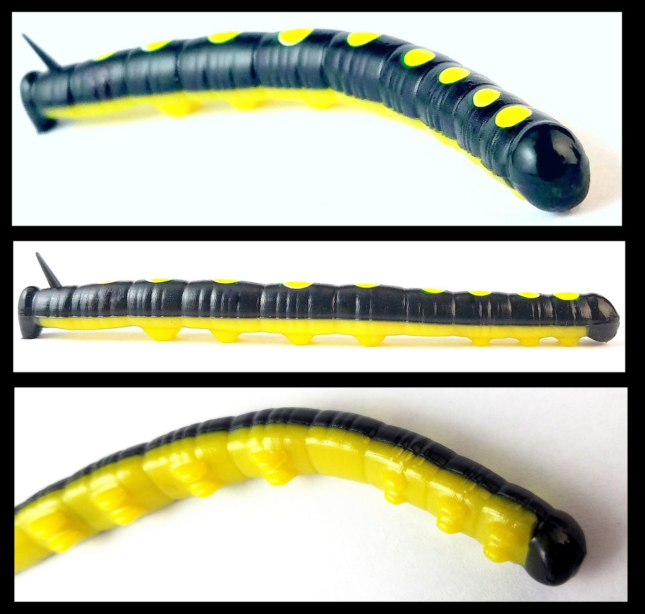 Catawba Worm