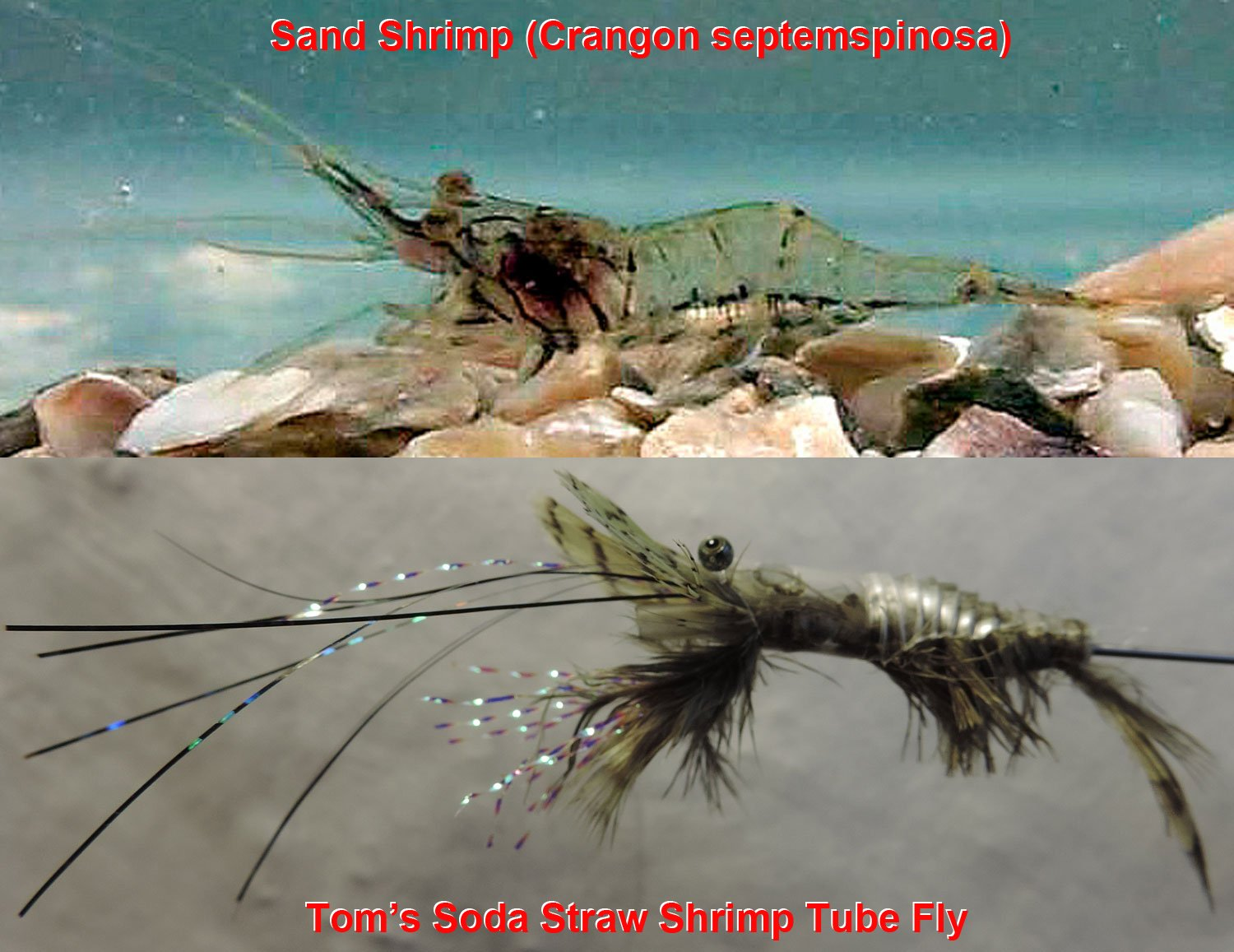 2nd - Sand shrimp fly by TomBell