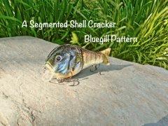 Segmented Bluegill