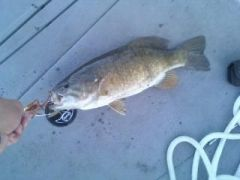 SMB caught in Arizona Rim Lakes