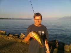 PB Yellow perch on home poured Wild Willy