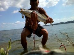indian river trout on a black and silver hitman