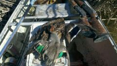 And A Couple Days Later Some Ducks