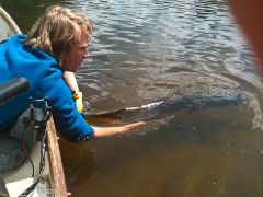Jp 122cm northern pike release2