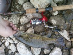 2012 smallmouth#3