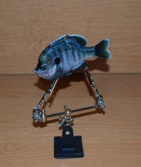 Male Coppernose