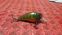 bass food squarebill