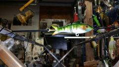 4 in shad painted in gill