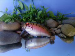 Rainbow Trout Wake Bait