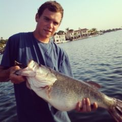 12lb Largemouth Bass