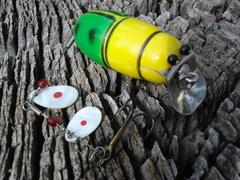 Creek Chub Beetle reproduction