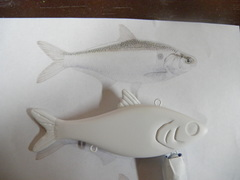 large gizzard shad lipless