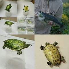 turtle topwater