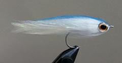 Blue Back Baitfish