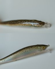 Baby Trout.JPG