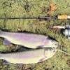 fishratz